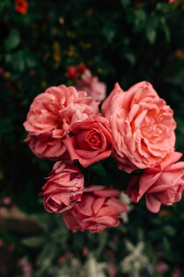 Bouquet Saint Valentin 2019