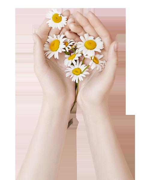 fleurs dans mains