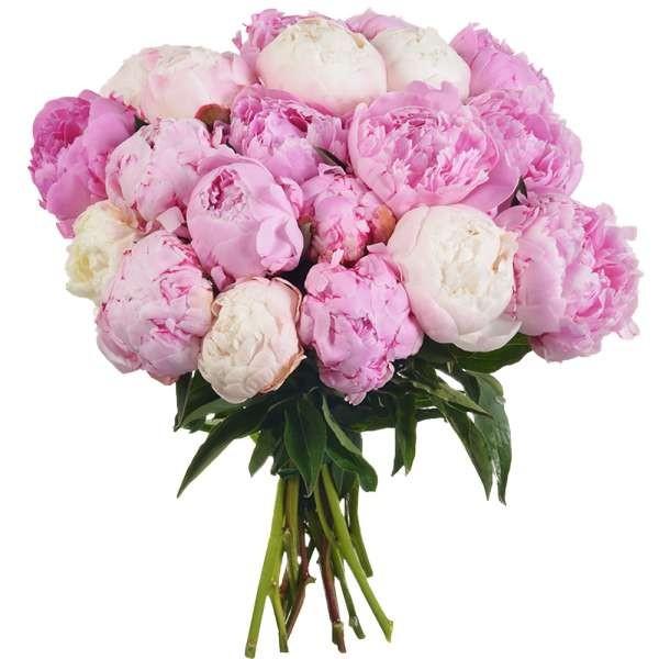Bouquet de 20 Pivoines