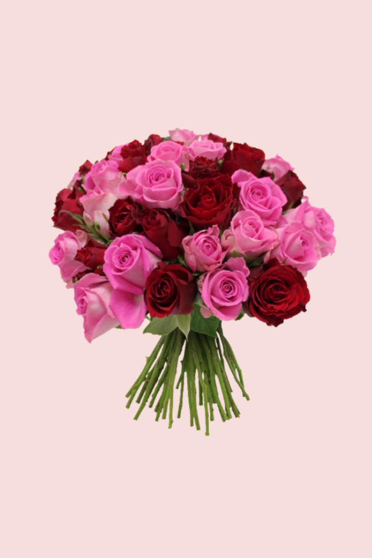 Brassée de roses - Max Havelaar